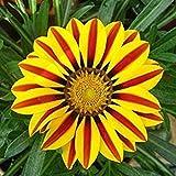 VISTARIC Gelb: 20pcs Bunte Oleander New Seeds Schöne Blumensamen Die Budding Rate 95% Gartenpflanze für Kind-Geschenk Very Easy-Anlage