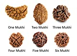 #7: Ankita Gemstones Real 1 Mukhi 2 Mukhi 3 Mukhi 4 Mukhi and 5 Mukhi 6 Mukhi Rudraksha Bead, Buy 10 set in 1 set price (1 to 6 face rudraksha Total 60 pcs Rudraksha)