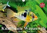 Knallbunte Wasserwelt. Die Welt der Fische (Wandkalender 2019 DIN A4 quer): Die bunte Welt der Fische und Wasserbewohner (Geburtstagskalender, 14 Seiten ) (CALVENDO Tiere)