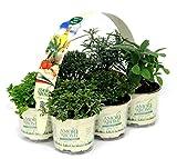 Pianta aromatiche N.6 vasi x 2 pack (in vaso diam.9cm)