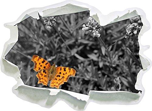 bella farfalla su prato in fiore bianco, carta da parati