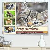 Putzige Katzenkinder. Drollige Kätzchen entdecken die Welt!(Premium, hochwertiger DIN A2 Wandkalender 2020, Kunstdruck in Hochglanz): Winzige ... (Monatskalender, 14 Seiten ) (CALVENDO Tiere)