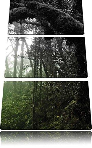 Pracht Gerahmt (Regenwald in seiner ganzen Pracht 3-Teiler Leinwandbild 120x80 Bild auf Leinwand, XXL riesige Bilder fertig gerahmt mit Keilrahmen, Kunstdruck auf Wandbild mit Rahmen, gänstiger als Gemälde oder Ölbild, kein Poster oder Plakat)