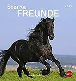 Pferde Postkartenkalender - Starke Freunde - Kalender 2019
