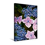 Calvendo Premium Textil-Leinwand 30 cm x 45 cm hoch, Die Zarten rosa Blüten Einer Hortensie (Hydrangea) | Wandbild, Bild auf Keilrahmen, Fertigbild auf Echter Leinwand, Leinwanddruck Natur Natur
