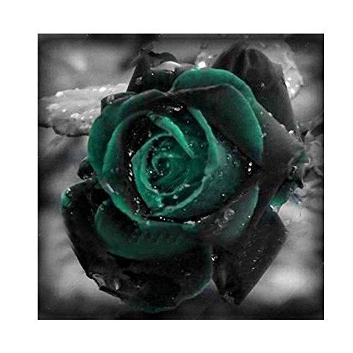 Semillas de Rosas Verde 50 PCS Semillas de Flores Raras para Jardin, Huerto, Balcon Interior