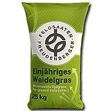 Einjähriges Weidelgras 25kg Italiana Raygras Cultivo Biogas Comida - Especial Tipos Sólo sobre Solicitud - Para Raíz Ackerfutterbau - Para Biogasanlagen - Para Zwischenfruchtanbau a Grano