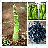 Pinkdose 10pcs Piante di asparagi Inferiore pressur Sangue, Verdure biologiche e Piante da frutto per la casa Giardino delle Piante
