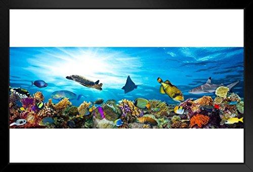 Great Barrier Reef Colorful Coral Fish Sea Turtle Foto Kunstdruck Poster, gerahmt 50,8x 35,6cm -