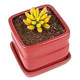 Pure.Lifestyle Keramik Blumentopf, Klein Sukkulententopf, Pflanzentopf mit Tablett, Würfelförmig, Rot