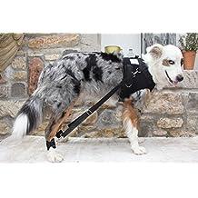 Formación arnés para perros con enfermedades degenerativas de las patas traseras y cadera