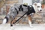 FlexiPander die neue Hilfe für die Hinterläufe Ihres Hundes (S)