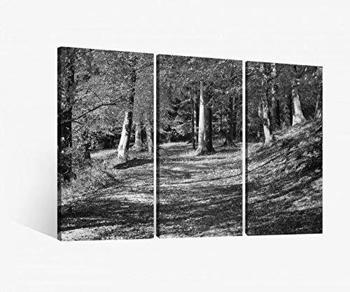 Leinwandbild 3 tlg Herbstwald Herbst Wald Baum Weg Landschaft bunt schwarz weiß Bild Bilder Leinwand Leinwandbilder Holz Wandbild mehrteilig 9W519, 3 tlg BxH:120x80cm (3Stk 40 x 80cm)