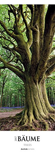 bume-2017-trees-wald-streifenkalender-xxl-25-x-70-landschaftskalender-naturkalender