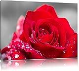 wunderschöne Rose mit Wassertropfen schwarz/weiß Format: 60x40 auf Leinwand, XXL riesige Bilder fertig gerahmt mit Keilrahmen, Kunstdruck auf Wandbild mit Rahmen, günstiger als Gemälde oder Ölbild, kein Poster oder Plakat