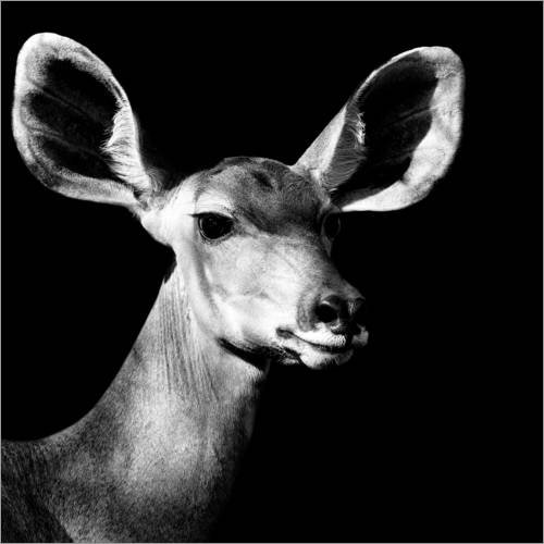 Acrylglasbild 80 x 80 cm: Safari Profil Collection - Antelope Impala Portrait Black Edition VI von Philippe HUGONNARD - Wandbild, Acryl Glasbild, Druck auf Acryl Glas Bild - Safari-wandhalterung