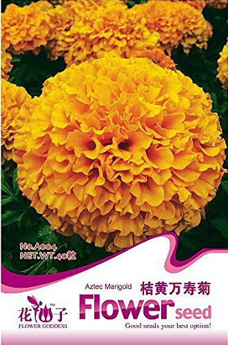 1 Original Pack, 40 graines / Pack, Orange African Marigold Marigold Français Herbes Tagetes Erecta Flower Seeds # A004