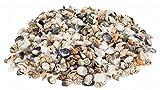 NaDeco® Muschelmix small 1kg | Bastelmuscheln | kleine Dekomuscheln | kleine Muscheln und Schnecken für Ihre maritime Tischdekoration