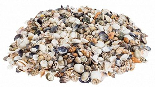 NaDeco-Muschelmix-small-1kg-Bastelmuscheln-kleine-Dekomuscheln-kleine-Muscheln-und-Schnecken-fr-Ihre-maritime-Tischdekoration