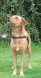 Walk Your Dog With Love Hundegeschirr, mit Führring an der Brust, verhindert Ziehen, ideal für Hunde, die zwischen 11,3-29,4kg wiegen, Umfang 53-81cm, kaffeebohnenfarben