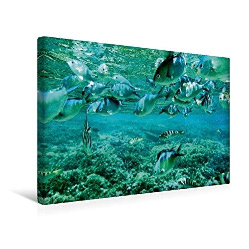 Calvendo Premium Textil-Leinwand 45 cm x 30 cm Quer, Fische vor Nusa Lembongan, Bali | Wandbild, Bild auf Keilrahmen, Fertigbild auf Echter Leinwand, Leinwanddruck Orte Orte