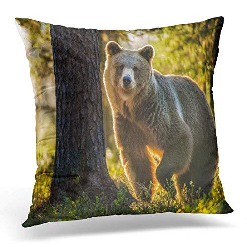 Dekokissen Green Grizzly Wild Adult Braunbär Ursus Arctos im Sommer Forest Aggressive Dekorative Kissen für Sofa Schlafzimmer Auto