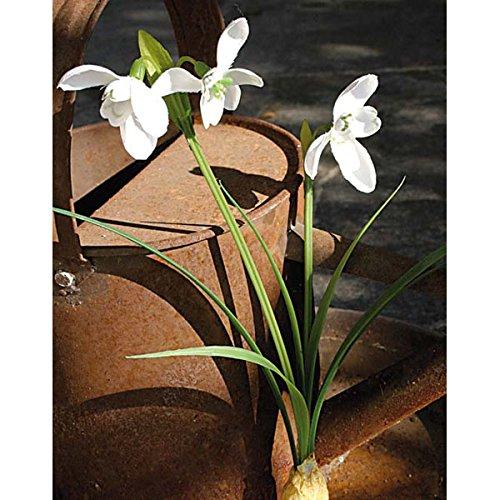 artplants.de Set de 9 x Galanthus Artificial con Bulbo, Blanco, 25cm – Campanillas Decorativas – Plantas con Flores