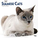 Siamese Cats 2019 Square Wall Calendar