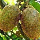 Frutales Tamano Plantas Planta El Mejor Producto De 2019