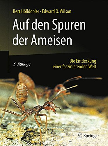 auf-den-spuren-der-ameisen-die-entdeckung-einer-faszinierenden-welt
