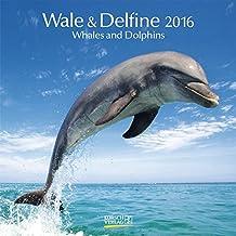 Wale und Delfine 2016: Broschürenkalender mit Ferienterminen