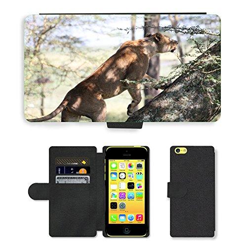 Just Mobile pour Hot Style Téléphone portable étui portefeuille en cuir PU avec fente pour carte//m00138434Leone Afrique faune Animaux Paysage//Apple iPhone 5C