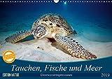 Tauchen, Fische und Meer (Wandkalender 2019 DIN A3 quer): Unterwasserimpressionen (Monatskalender, 14 Seiten ) (CALVENDO Tiere)