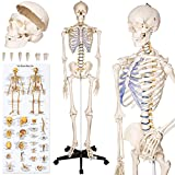 TecTake Human skeleton anatomical model Life Size 181cm + poster + bonnet