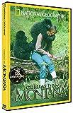 Gorilas En La Montaña [DVD]