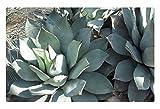 iRocket - Tappeto per Interni – Un Giorno Verde a Edmonton Garden 19 (60 x 40 cm)