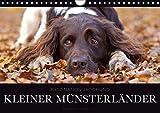 Faszination Jagdhund - Kleiner Münsterländer (Wandkalender 2018 DIN A4 quer): Kleiner Münsterländer Vorstehhund - Ein Leben neben der Jagd ... [Kalender] [Apr 13, 2017] Gerlach, Nadine