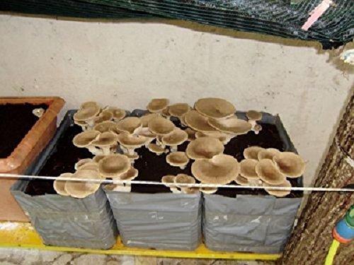 10 pezzi kit coltivazione funghi pleurotus cardoncello substrato panetti funghi,casa giardino