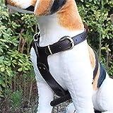 Hund Geschirr Leder Halsband Brust Gurt, Einstellbar Zum Mittel Groß Haustier Hund Draussen Ausbildung Gehen, Nein Traktion Seil