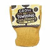 Bag Plant Towering Sunflower - Minigarten Riesen-Sonnenblume Selbstanbau