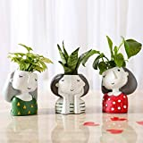 Ferns N Petals Set of 3 Air Purifying Plants in Multicolor Raisin Pots