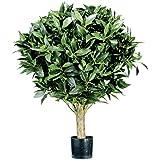 Floral Concept Plants&Trees - Arbusto Laurel, 55 x 40 x 40 cm, color verde natural