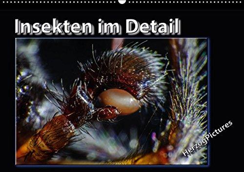 insekten-im-detail-wandkalender-2017-din-a2-quer-nahe-magie-der-insekten-im-detail-betrachtet-monats