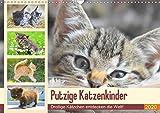Putzige Katzenkinder. Drollige Kätzchen entdecken die Welt! (Wandkalender 2020 DIN A3 quer): Winzige Freigänger auf Entdeckungsreise! (Monatskalender, 14 Seiten ) (CALVENDO Tiere)