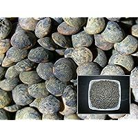 Obiettivo comune verde–15Grammi–Lens Culinaris L–Lentil–(fertilizzante Verde–Green Manure)