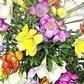 """Bunte Freesien - """"Farbenfrohes Geschenk"""" von Blumenversand Rosenbote bei Du und dein Garten"""