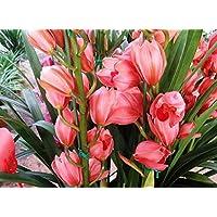 Visa Store NF564xT14: 2018 Nouveautés !!24 tipos de fondos de floración de orquídeas Phalaenopsis pour votre choix - (Couleur NF564xT14)