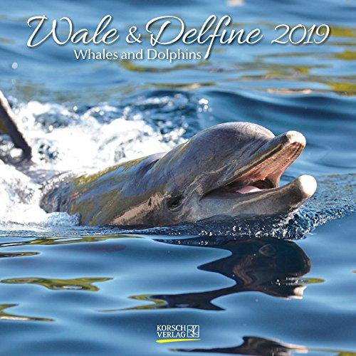 Wale und Delfine 2019: Broschürenkalender mit Ferienterminen. Tierkalender von Fischen. 30 x 30 cm