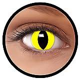 FXEYEZ Farbige Kontaktlinsen gelb Katze + Linsenbehälter, weich, ohne Stärke als 2er Pack - angenehm zu tragen und perfekt zu Halloween, Karneval, Fasching oder Fasnacht