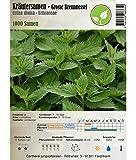 Kräutersamen - Grosse Brennnessel/Urtica dioica 1000 Samen